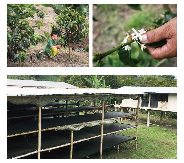 コロンビアウィラマリア農園2017