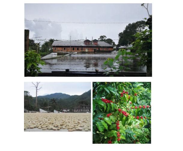グァテマラ・アウストラリア農園説明