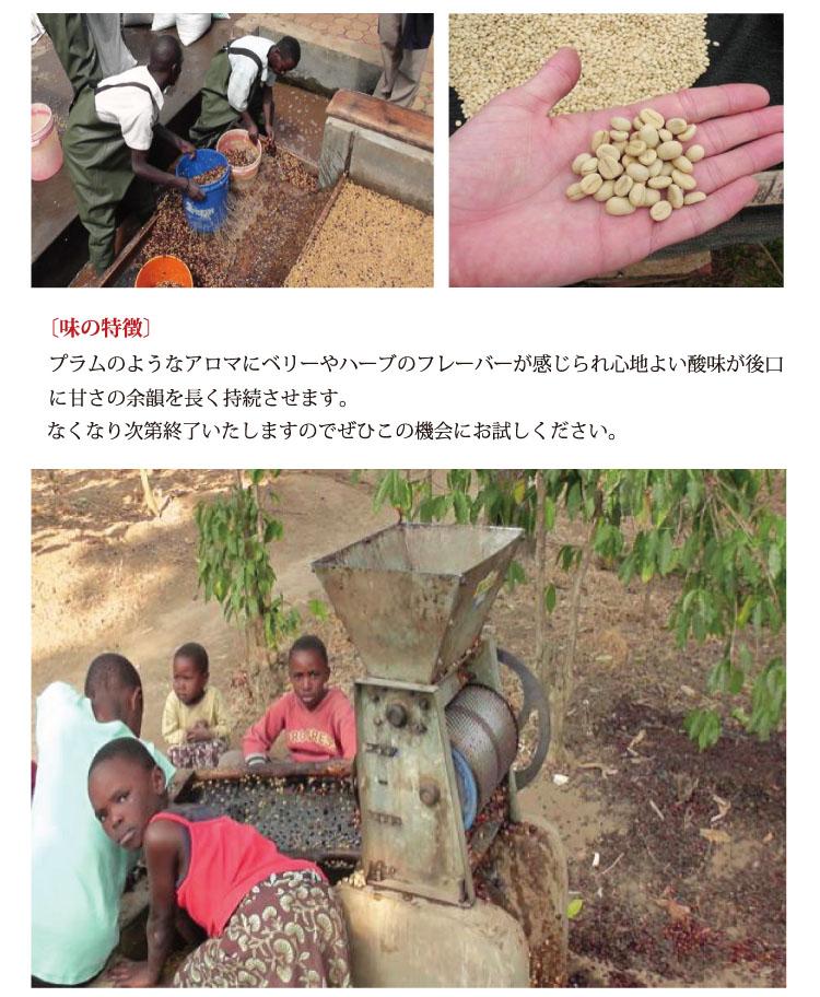 ケニア・マサイAA説明4
