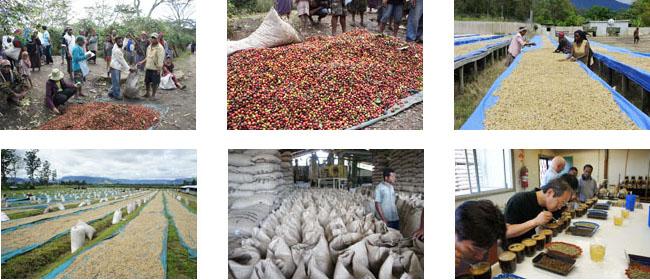 スペシャルティコーヒー豆、シグリニューギニア