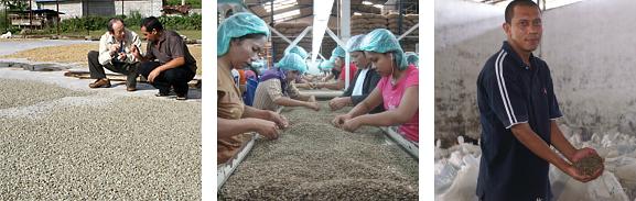 インドネシア産マンデリンの最高級品、マンデリントバブルー